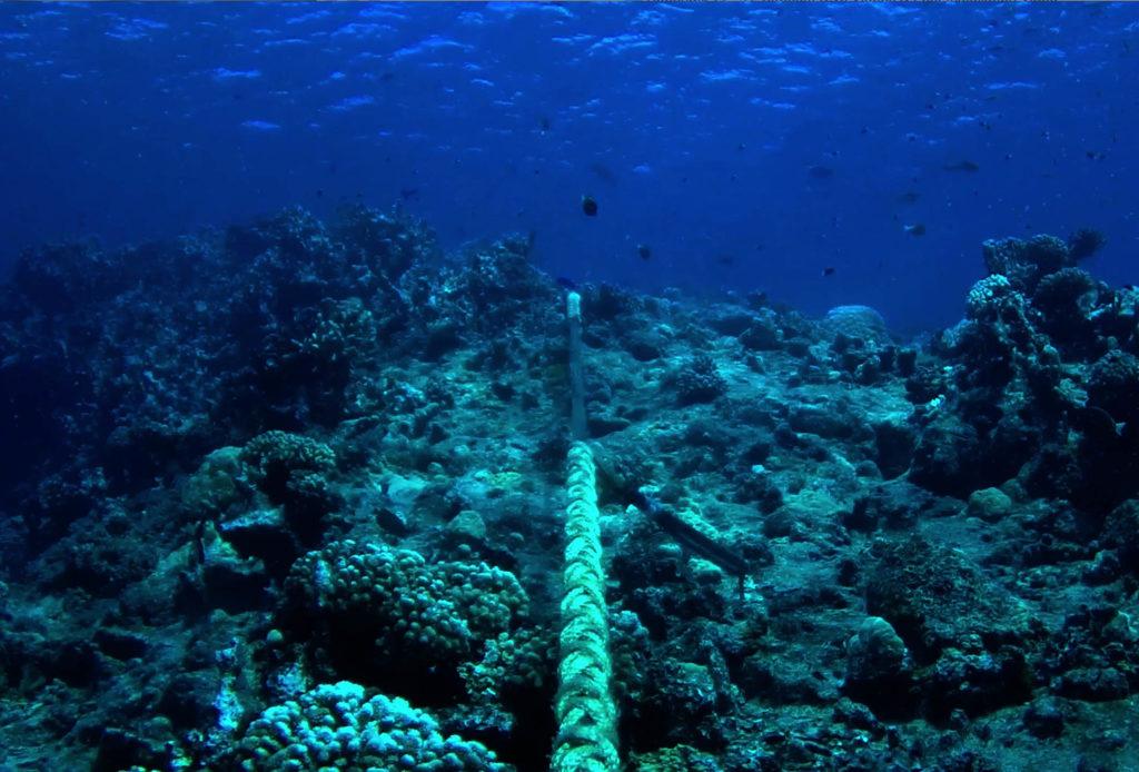 Landing Site & Dive Surveys
